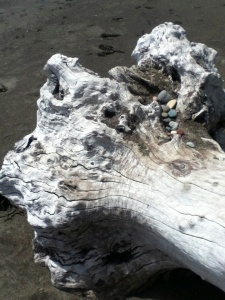 Driftwood on Moonstone Beach