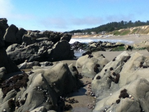 Rocks (and cool barnacle things!) on Moonstone Beach