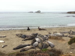 "When the sign said ""Elephant Seal Viewing Area,"" we thought we'd maybe see one, in the distance. We did not expect this!"