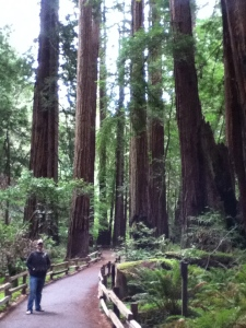 Justin in Muir Woods