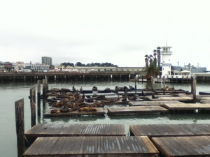 Sea lions at Fisherman's Wharf